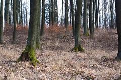 Trees - Drzewa (Król Paweł) Tags: trees drzewa nature yashica yaschinon 50mm m42 vintagelens japoneselens las