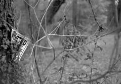 Posted (PositiveAboutNegatives) Tags: nikon rangefinder s3 vintagecamera nikons3 50mm nikkor 50mmnikkorf14 yellowfilter bokeh film analog bw blackandwhitefilm ilford panf kodak hc110 florida coolscan notrespassing sign signage