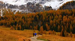 The Sunday walk _MG_4265m2(1) (maxo1965) Tags: hiking fallcolors friends mountains autumn vallesannicolò valdifassa fassatal sunday walk dolomites