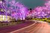 Electric Spring (Ballet Lausanne) Tags: tokyo roppongi night d800 tokyomidtown 東京ミッドタウン