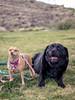 IMG_2083 (francisXL23) Tags: animals mans best friend california canon rebel t7i eos portrait sigma 30mm f14 14 dc art photography photoshoot