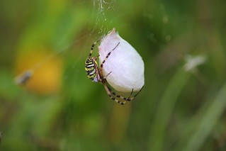 The next generation of spiders