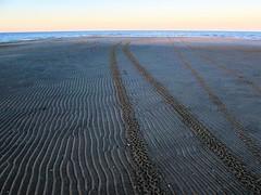 Where did they go? (thomasgorman1) Tags: tracks canon sand sandbar tide lowtide tiretracks outdoors sea landscape nature desert baja mx mexico horizon