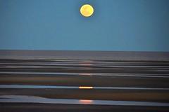 Moon rising (thomasgorman1) Tags: beach nikon moon fullmoon view landscape sea lowtide tide dusk night horizon baja mexico