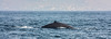 IMG_1962-1 (Andre56154) Tags: spanien spain espana andalusien andalusia meer ozean ocean wasser water wal whale tier animal flosse fin