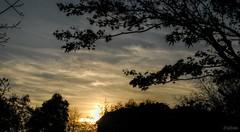 Las cortas tardes (Franco D´Albao) Tags: francodalbao dalbao atardecer sunset tarde evening ocaso árboles nubes trees clouds cielo sky nikond60