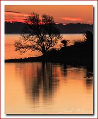 Sunrise Silhouette (Deek Wilson) Tags: tree silhouette islandhill strangfordlough newtownards sunrise landscape lough