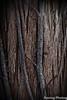Bark (robtm2010) Tags: yarmouth massachusetts usa capecod cape newengland canon canont3i t3i tree bark