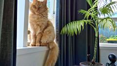 Massey, West Auckland, New Zealand (Sandy Austin) Tags: panasoniclumixdmcfz70 sandyaustin westauckland auckland northisland newzealand massey cat mario