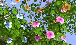 Heart Wild Flowers