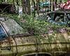 Old Car City 85 (augphoto) Tags: augphotoimagery abandoned auto automobile car decay old weathered white georgia unitedstates