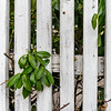 Happy Fenced Friday! (Janos Kertesz) Tags: zaun plant fence wood background texture nature wooden abstract natural pattern garden green material detail