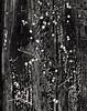 Monochrome Mold Details (CactusD) Tags: greenhouse glasshouse horticulture gardening landscape england botany nikon d800e fx texture uk unitedkingdom gb 85mmf28pce 85pce 85mm f28 pce tiltshift tilt shift decay detail wabisabi wabi sabi textures united kingdom greatbritain great britain monochrome black white blackwhite bw
