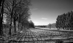 Shire (Rosenthal Photography) Tags: 20180202 landschaft bnw schwarzweiss ff400 zeven 35mm bäume washiz400 pflanzen ff135 rodinal12521°c7min städte bw wald olympus35rd analog felder dörfer siedlungen landscape nature forest path track trail pathway way winter february blachandwhite mood olympus olympus35 35rd fzuiko 40mm f17 washi washiz redfilter red filter rodinal r09 125 epson v800