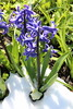 IMG_7053 (Usagi93190) Tags: macro flower biltmore estates greenhouse gardens ashville north carolina