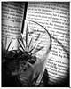 Bourbon and Books 82/365 (gowanuscanal) Tags: hipstamatic lumière aobw triplecrown