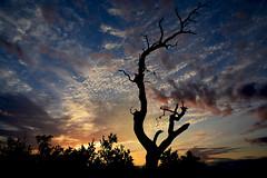 Sunset South Africa_4459 (ichauvel) Tags: coucherdesoleil sunset arbre tree branche parckruger krugernationalpark afriquedusud southafrica voyage travel ciel sky lumiére light nuages clouds exterieur outside afrique africa