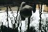 (lejardindevenus) Tags: waterreflections masayoshiohira japanesegarden park coyoacan mexicocity cdmx ciudaddeméxico parquemasayoshiohira