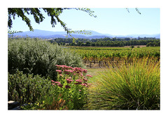 Beauty of the Yarra Valley (Greenstone Girl) Tags: winery view grapevines yarra valley domain chandon cafe green