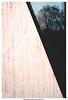 Stadtbaum (dirkbreisch) Tags: lonesometree woindow dirkbreischphotography einfachnurgut düsseldorf sonya7ii mirror spiegelungen