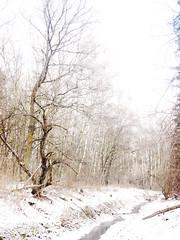 winter impresion (Darek Drapala) Tags: winter cold snow impression white panasonic poland polska panasonicg5 olszynka lumix light forest trees nature fantasticnature