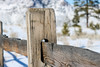 The Fence (Jessie T*) Tags: fence fencedfriday fencepost snow winter bokeh