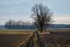 _MG_3013_C (grzegorz_63) Tags: winter field dirttrack landscape trees sky clouds nature outside perspective canon70d