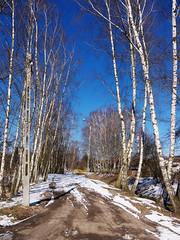 a path (Darek Drapala) Tags: path winter snow cold color white sky blue nature natural village country countryside panasonic poland polska panasonicg5 lumix trees sun sunshine sunny