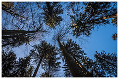 Forest... (mariolka3) Tags: naturewatcher nature nikkor nikon trees sky forest