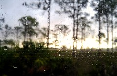 Post-precipitation sunrise (carribeansquid) Tags: drops waterdrops water sunrise trees babcockwebb babcock webb wma puntagorda florida lgg4 lg g4 phone smartphone window morning homeschoollife homeschool