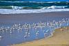 Birds on Marina State Beach (SVS Maestro) Tags: monterey marinabeach