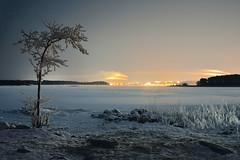 Winter Radiance XI (Kojaniemi) Tags: nightphotography night reed frost ice sea shore kimmoojaniemi kojaniemi nightscene nightscape seascape winter winterwonderland