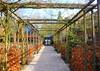 Arboretum Kalmthout, entrance and reception houses (jackfre 2) Tags: belgium kalmthout arboretum house bricks buildings perspective