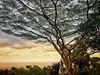 On the road to Hana, Maui (larrykitzman) Tags: hana hawaii maui landscape ocean tree