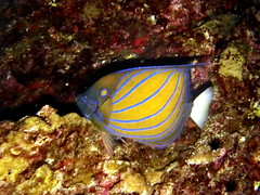 TH2018-d4-00009 (markb120) Tags: fish animal fauna water sea ocean underwater diving scuba coral reef