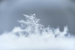 Snowflakes (Paladin27) Tags: snow snowflake snowflakes flakes flake winter ice macro closeup focusstack focusstacking stacking 50mmf18 85mmf18 coupler coupling