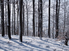 téli erdő / winter forest (debreczeniemoke) Tags: tél winter hó snow erdő forest fa tree olympusem5