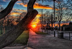 Sunset and the tree!🌞😁🌞 (LeanneHall3 :-)) Tags: treetrunk tree street sunset fierysunset sunshine sun streetlamps trees branches orange red yellow green grass blue sky skyscape white clouds hull kingstonuponhull landscape canon 1300d unning capture sundaylights cloudsstormssunsetssunrises