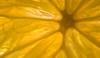 c fruit (johndifool) Tags: citrus zitrus frucht fruit macromondays