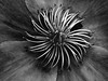 spinner (marianna_a.) Tags: flower center centre white pale macro mariannaarmata bw monochrome greyscale blackandwhite