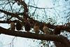 Ladies and Gentlemen (Marta Marcato) Tags: chicken hen bird tree six male female symmetry branch leaves winter cold nikond7200 nikon