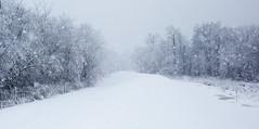 Nor'easter (arlene sopranzetti) Tags: snow noreaster nj winter storm lenape park cranford