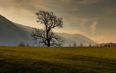 Lone Tree, Early Morning (Peter Quinn1) Tags: morning rays lonetree lakedistrict cumbria winter february dawn hills shaftsoflight stjohnsinthevale