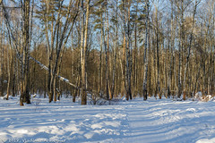 2018-03-19-08-21-36-7D2_3965 (tsup_tuck) Tags: 2018 march moscow spring woods