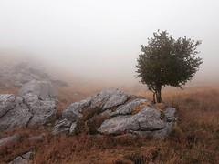 The Secret Land (Evangelia Athanasopoulou) Tags: landscapephotography mountain fog evangeliaathansopoulou color