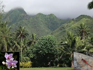 Streamland. Fernland Orchid, Spathoglottis plicata, and Diplacodes bipunctata, Small Red-body Dragonfly, Ngatangi'ia, Rarotonga, Cook Islands