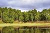 Craigellachie NNR - lochan and birch forest (SNH Images) Tags: silverbirch craigellachie nnr nationalnaturereserve naturereserve reserve lochan