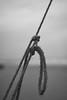 Knots (Stueyman) Tags: alpha ilce sony a7 a7ii za zeiss 55mm rope beach knots bw blackandwhite noiretblanc