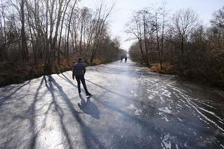 Skating along the swamp forests of the Weerribben