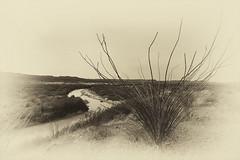 Across the borderline (hightoneguy) Tags: rio grande river texas mexico